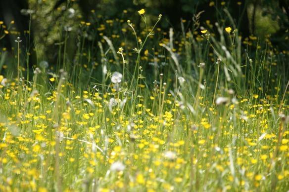 meadow-123280_1920