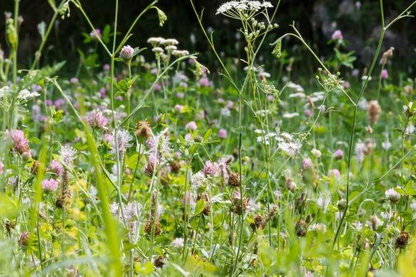 meadow-1620311_1920